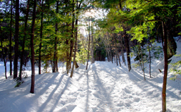 NewHampshire_Featured